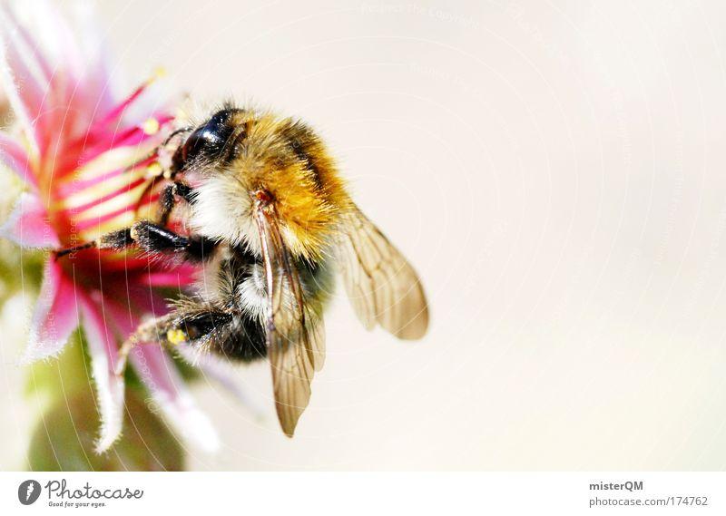 Ohne Fleiß kein Preis. Natur schön Tier Leben Ernährung klein Blüte fliegen Erfolg Pause Flügel niedlich Biene lecker Sammlung Restaurant