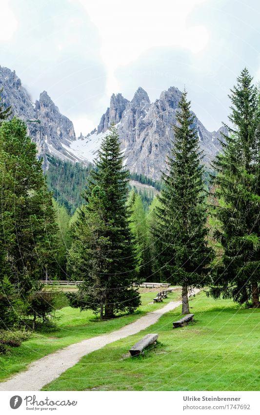 Blick zum Monte Cristallo Himmel Natur Ferien & Urlaub & Reisen Pflanze Sommer Baum Landschaft Erholung Wolken ruhig Wald Berge u. Gebirge Umwelt Wege & Pfade