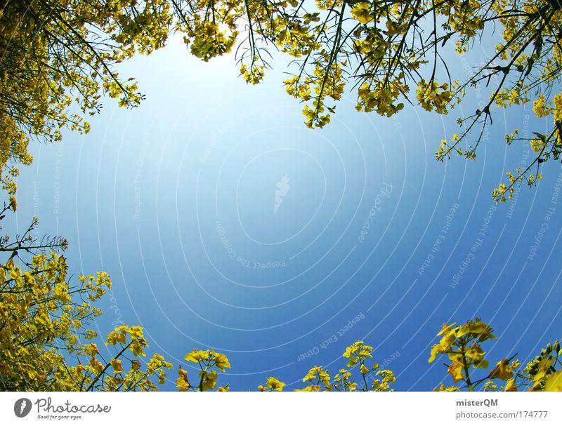 Ernte dankt. Himmel Wasser Sommer Sonne Erholung Luft Wetter Zufriedenheit Feld Klima Energiewirtschaft Zukunft Perspektive Schönes Wetter Aussicht