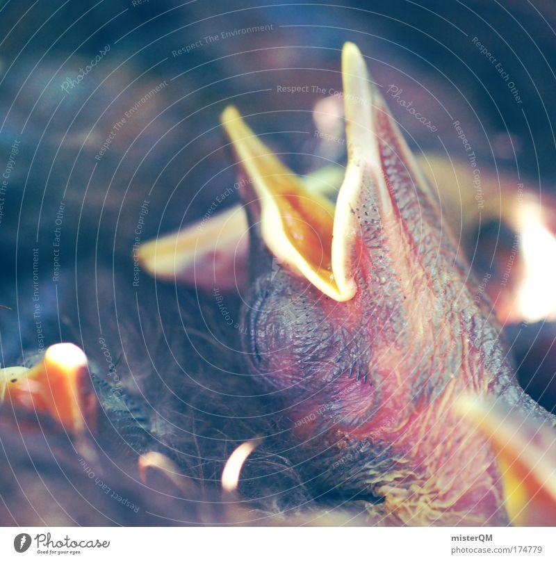 Sleeping Away. Leben Erholung Tod träumen Wärme Vogel Beginn schlafen Appetit & Hunger nachdenklich Alkoholisiert Stress Langeweile atmen Schnabel