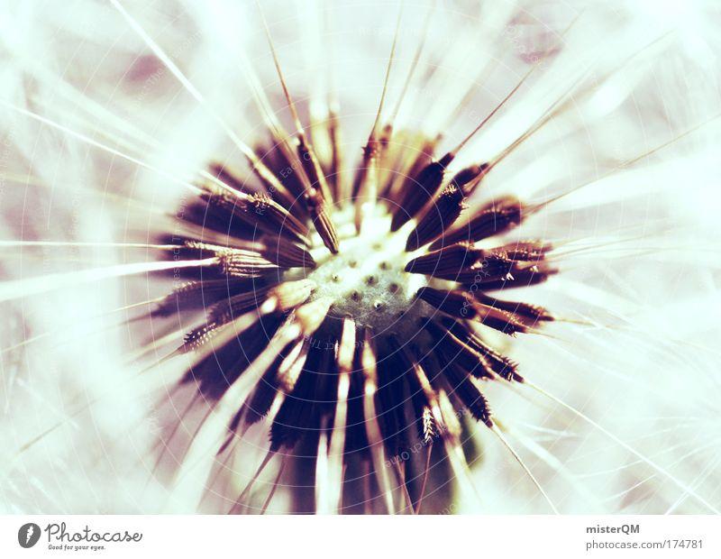 Starterlaubnis. Natur Erholung Luft Kunst hell Wind ästhetisch Zukunft Hoffnung Symbole & Metaphern Glaube Blume Löwenzahn blasen Momentaufnahme leicht