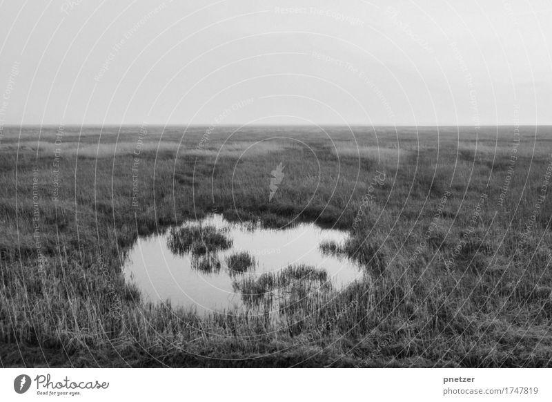 Silvester 2 Natur Ferien & Urlaub & Reisen Pflanze Landschaft Meer Tier Einsamkeit Ferne Umwelt Traurigkeit Gefühle Tourismus Stimmung Ausflug Abenteuer Nordsee
