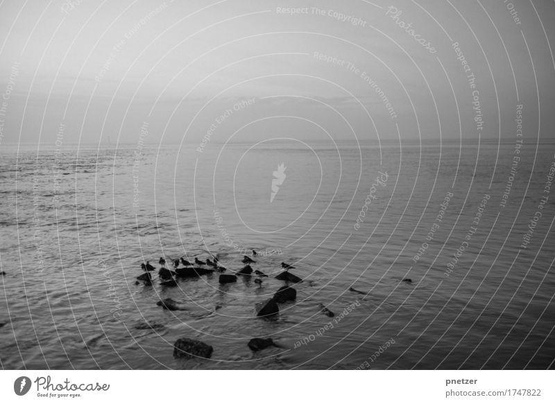 Stille Umwelt Natur Landschaft Urelemente Wasser Wetter Regen Wellen Küste Seeufer Strand Bucht Fjord Nordsee Ostsee Meer Gefühle Traurigkeit Einsamkeit Vogel