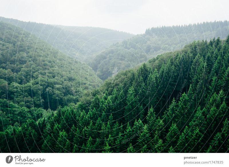Dunkelwald Natur Ferien & Urlaub & Reisen Pflanze Baum Landschaft Erholung Einsamkeit Ferne Wald Berge u. Gebirge Umwelt Gefühle Freiheit Tourismus Wetter