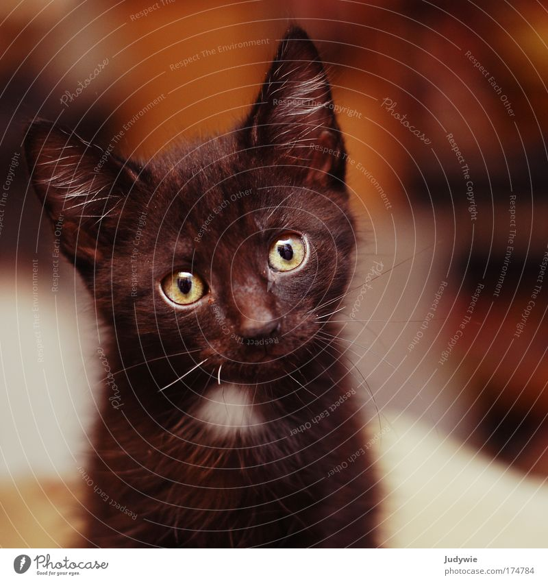 1x schwarzer Kater ... grün Tier Katze Angst klein beobachten Kindheit Neugier niedlich Todesangst Haustier Interesse Überraschung frech Nervosität
