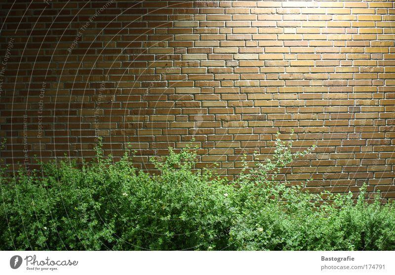 ziegelwand Farbfoto Mauer Wand Backstein Pflanze Natur