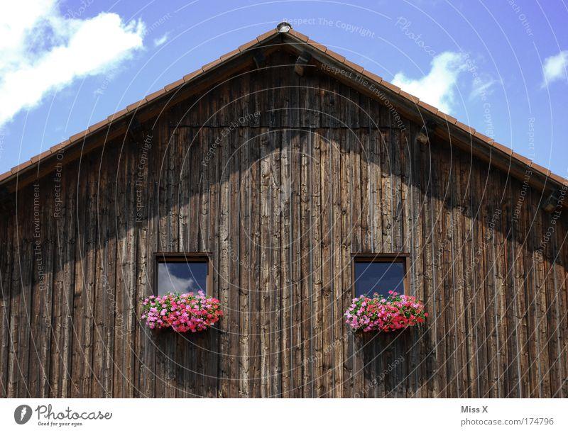 Doppelstadlhälfte alt Pflanze Haus Fenster Blüte Armut Dach Dorf Landwirtschaft Hütte Scheune Dachboden Fensterbrett Pelargonie Holzhaus