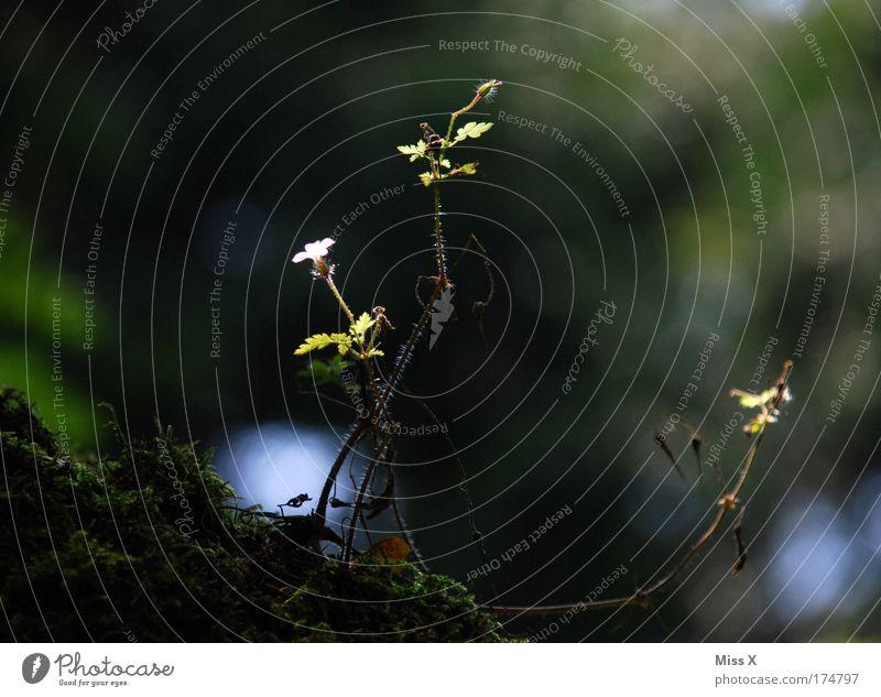 Mauerblümchen Natur Baum Pflanze Sommer Blume Blatt Umwelt dunkel Frühling Blüte Park Kraft Klima Wachstum frisch Ausflug