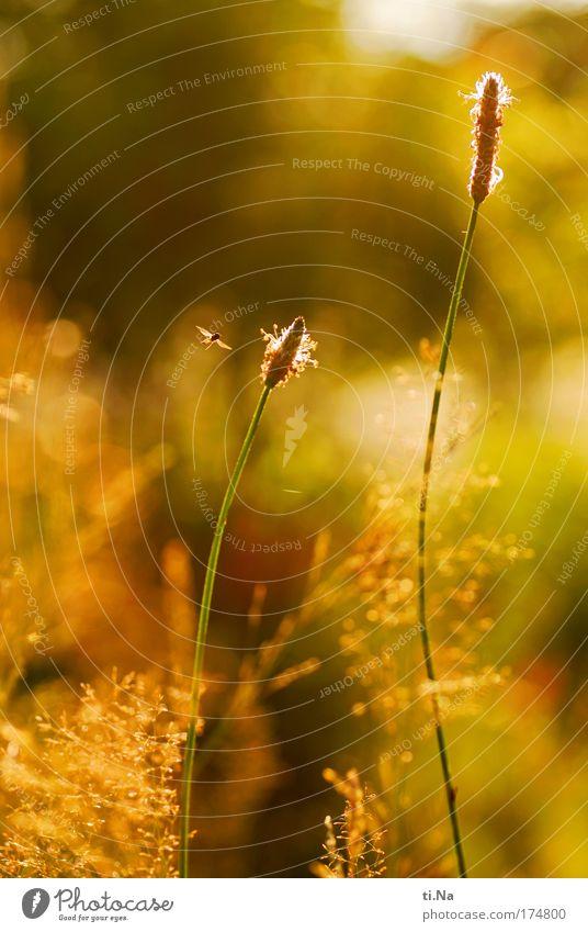 ***** 50 ***** Natur schön Sonne grün Pflanze rot Sommer Tier gelb Erholung Landschaft Umwelt fliegen gold Lebensfreude natürlich