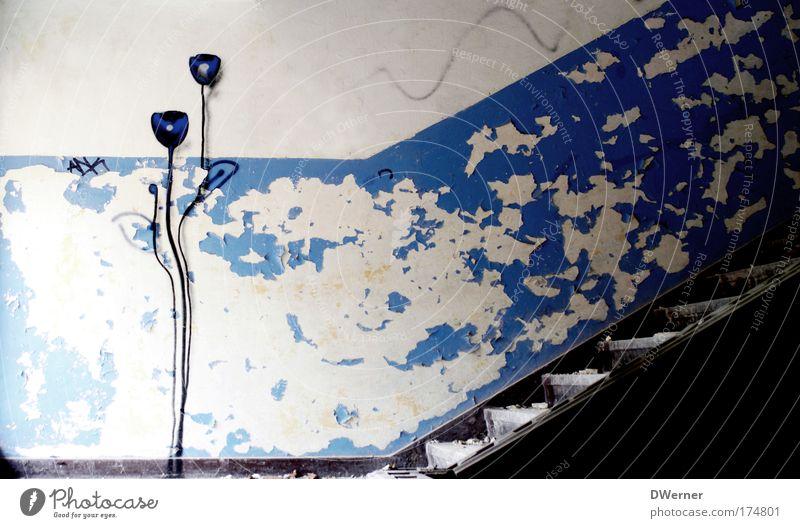 Treppenblümchen blau Pflanze Blume Haus Wand Graffiti Holz Stein Mauer Treppe Design Wachstum Rose Kultur Blühend Bühne