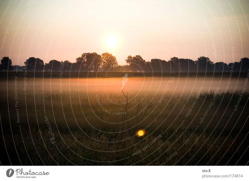 n bissl natur Himmel Baum Pflanze Sommer Ferien & Urlaub & Reisen Einsamkeit Ferne Wald Erholung Gefühle Gras Landschaft Zufriedenheit Stimmung Feld Nebel