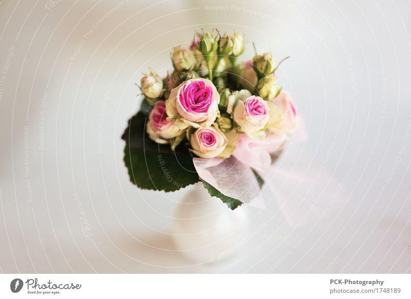 Hochzeits Blumen Strauß Pflanze rosa rot weiß Blumenstrauß Rosenblätter Liebesstrauss Blumenvase Rosenstrauß Makroaufnahme Farbfoto Nahaufnahme Unschärfe