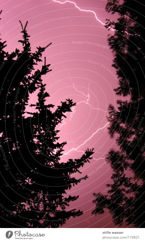 Unwetter Nacht Lichterscheinung Langzeitbelichtung Natur Urelemente Feuer Gewitterwolken Nachthimmel Wetter Sturm Regen Blitze Baum Aggression heiß hell schön