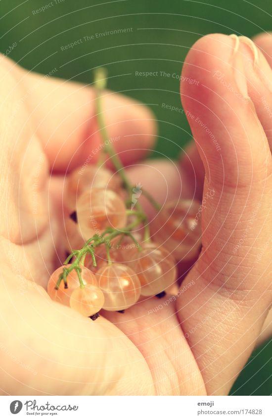 Früchtchen II Hand weiß Sommer Essen Frucht süß lecker füttern Johannisbeeren