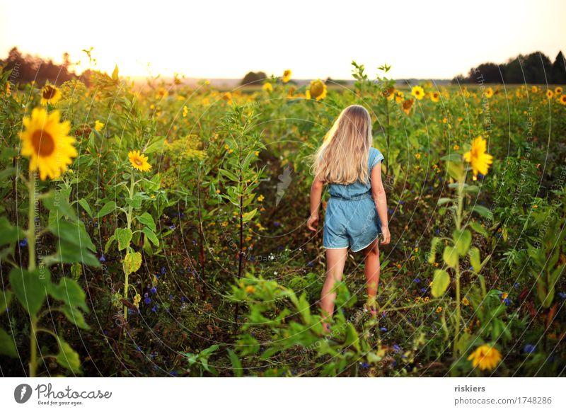 Im Sonnenblumenfeld Mensch Kind Natur Pflanze Sommer Landschaft Mädchen Umwelt feminin gehen wandern träumen leuchten Feld Kindheit Fröhlichkeit