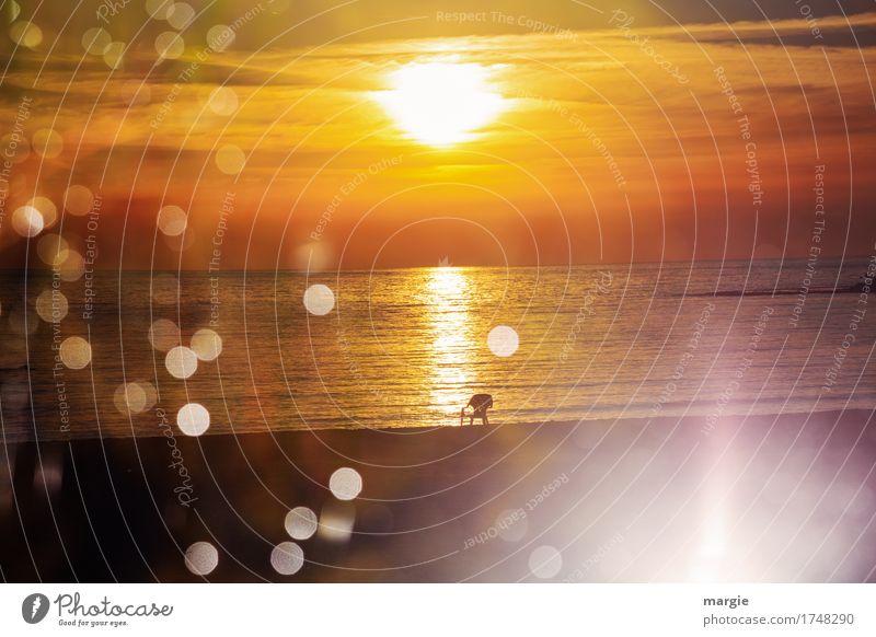 Ein Platz zum Träumen: ein Stuhl steht in einem Sonnenuntergang am Meer Erholung ruhig Meditation Freizeit & Hobby Ferien & Urlaub & Reisen Tourismus Ausflug