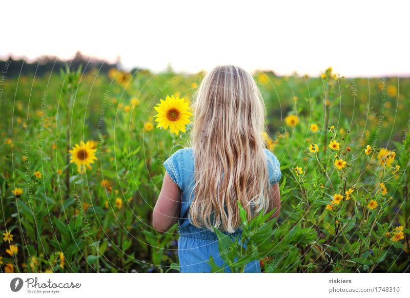 sunny Mensch feminin Mädchen Kindheit 1 3-8 Jahre Umwelt Natur Pflanze Sommer Blume Sonnenblume Sonnenblumenfeld Feld beobachten Blühend Denken entdecken