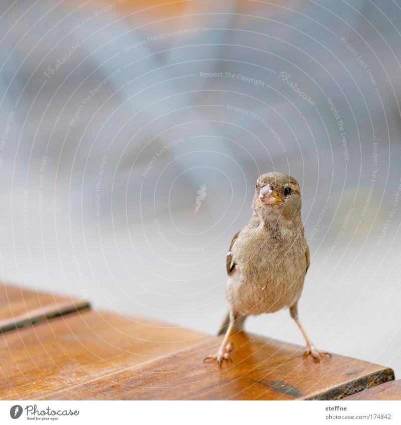 Ein Spatz vor der Linse ist besser als ne taube Nuss Ernährung Tier Vogel beobachten Neugier Wildtier