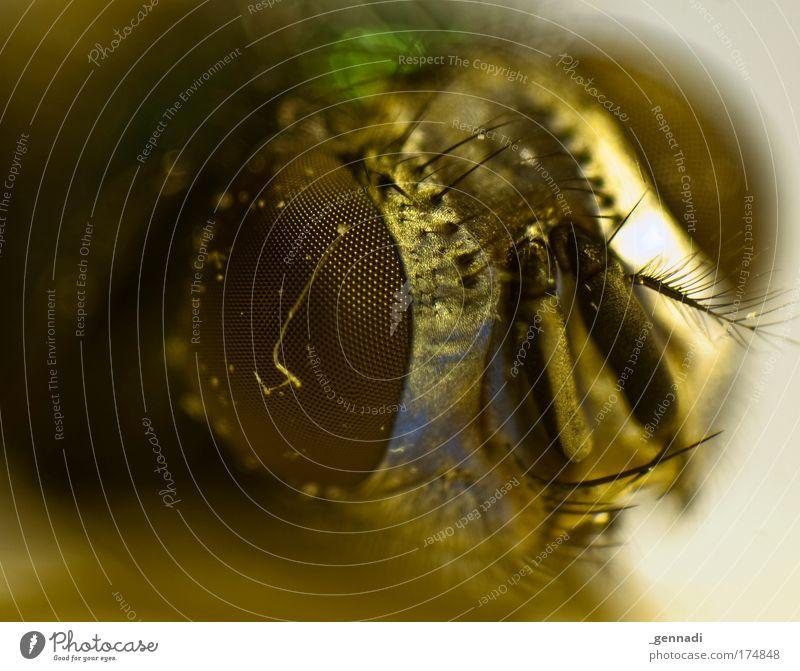Auf Augenhöhe Tier Fliege Tiergesicht liegen hässlich Absturz Nachtleben
