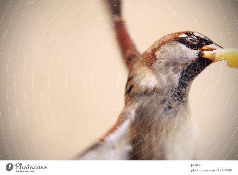 Pommes für den Spatz Natur Sommer Tier Essen Lebensmittel fliegen Vogel Park Luft Ernährung Wildtier Flügel berühren Tiergesicht Schnabel Fressen