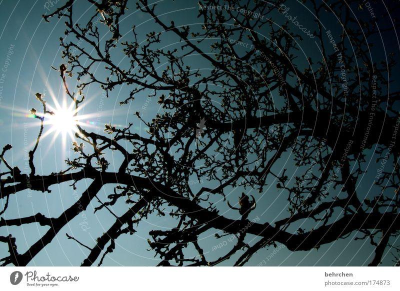 müssen ja nicht immer seychellen sein Farbfoto Außenaufnahme Menschenleer Sonnenlicht Sonnenstrahlen Gegenlicht Natur Wolkenloser Himmel Frühling Schönes Wetter