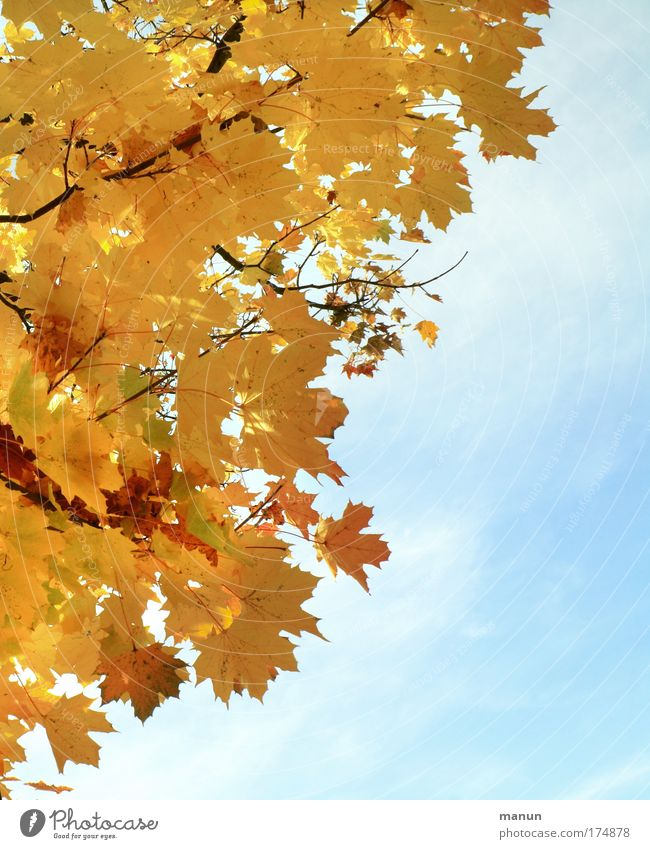 Herbstlicht Himmel Natur alt Sonne Erholung Blatt ruhig Umwelt gelb Herbst natürlich gold Vergänglichkeit Schönes Wetter Wandel & Veränderung harmonisch