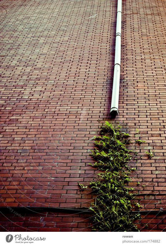 fassadenbegrünung Natur grün Pflanze Haus Wand Mauer Gebäude Architektur Umwelt Wassertropfen Fassade Wachstum kaputt wild Backstein
