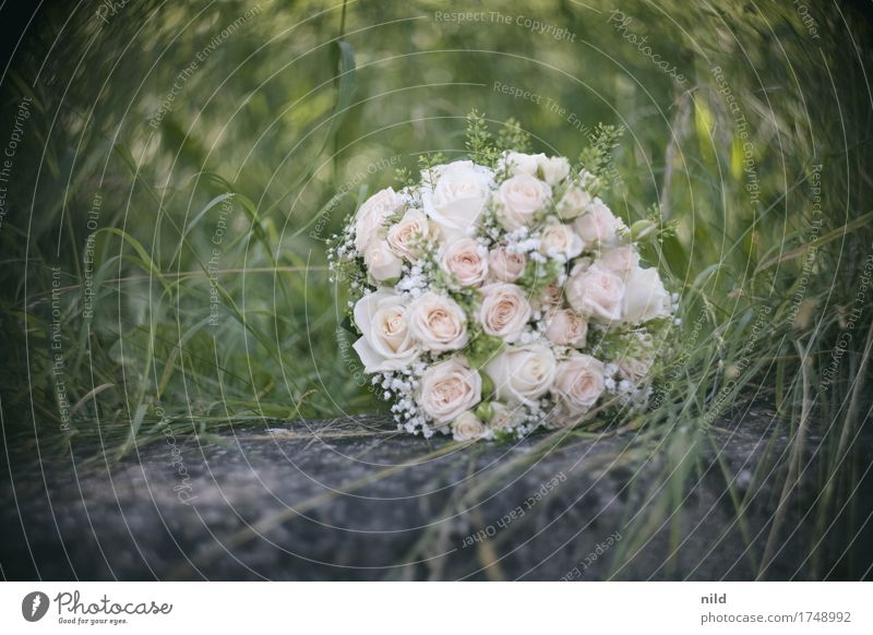 Brautstrauß Natur schön Liebe Wiese Park Hochzeit Rose Blumenstrauß Braut