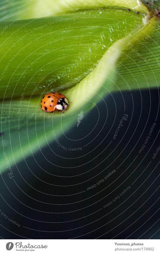 Käferle Natur Blume grün Pflanze rot Sommer Blatt Tier Wiese Gras Frühling Glück Park Feld klein Umwelt