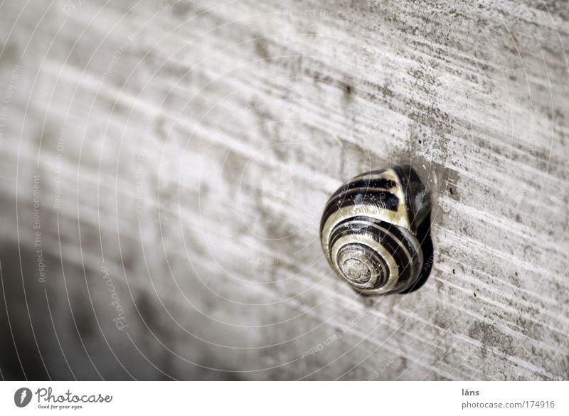 Zuhause ruhig Einsamkeit Tier grau Beton Sicherheit Pause Schutz Streifen Geborgenheit Schnecke stagnierend Schneckenhaus zurückziehen Rückzug Betonwand