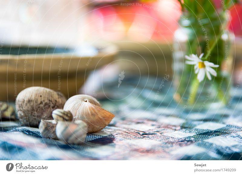 Aufgetischt Natur Pflanze Blume Garten Stimmung ästhetisch Schnecke