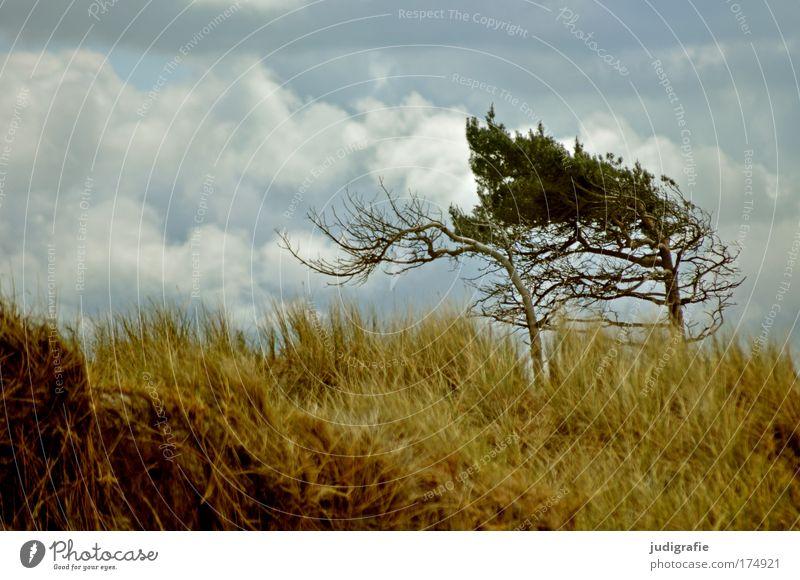 Weststrand Farbfoto Außenaufnahme Menschenleer Tag Umwelt Natur Landschaft Pflanze Himmel Wolken Klima Wind Baum Gras Küste Strand Ostsee Meer wild Kraft Darß