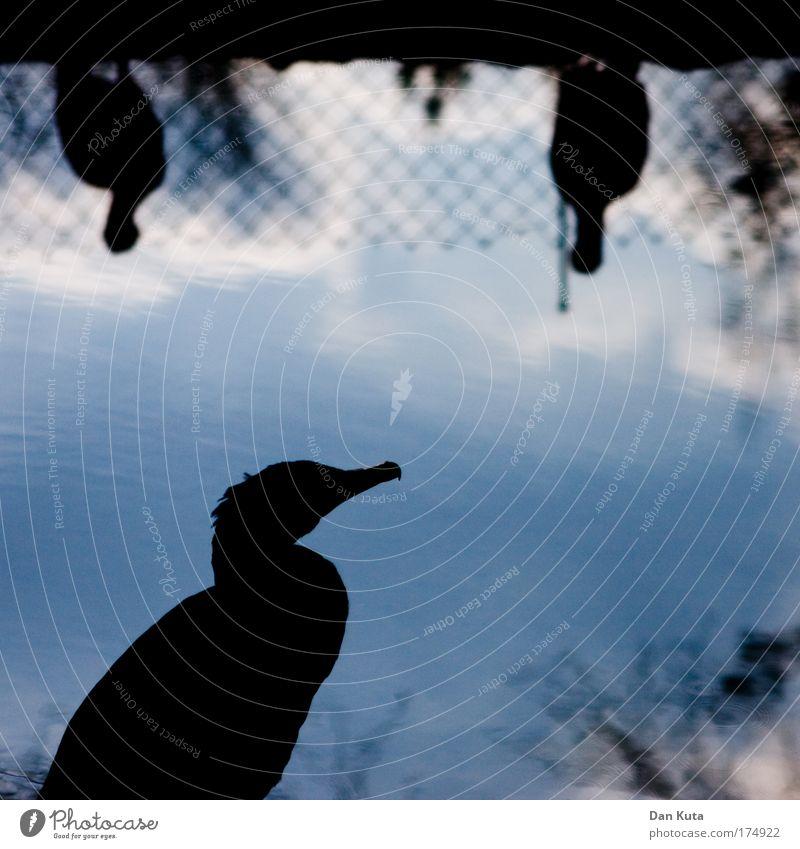 Ihr könnt mich mal! Umwelt Natur Wasser Himmel Sommer Schönes Wetter Tier Wildtier Vogel Kormoran 3 Tiergruppe Arbeit & Erwerbstätigkeit beobachten