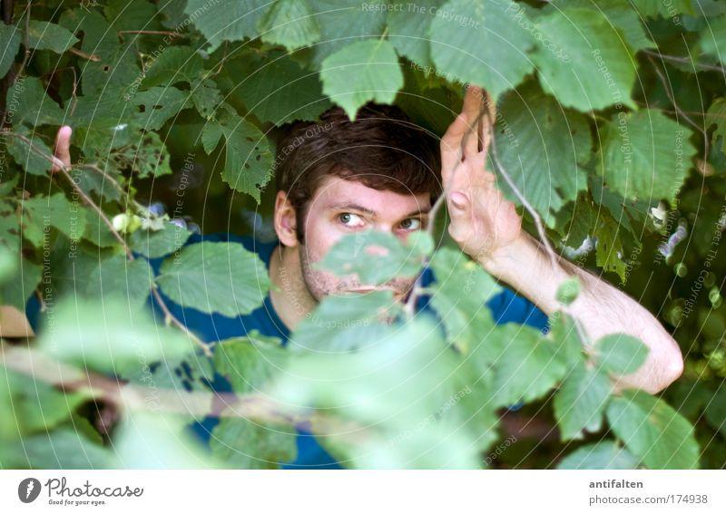 Buschmann Mensch Mann Natur Hand Baum grün Gesicht Blatt Auge Haare & Frisuren Kopf Erwachsene Arme maskulin Finger
