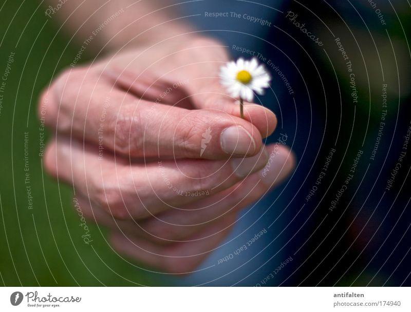 Kleine Geste Glück Mensch maskulin Mann Erwachsene Arme Hand Finger 1 Natur Blume Gänseblümchen Zeichen Freundlichkeit gut positiv schön blau gelb grün weiß