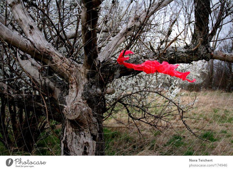 Rote Tüte Natur schön Baum rot Umwelt Leben Landschaft Gefühle Freiheit Glück Blüte Stimmung Wind Feld Klima leuchten