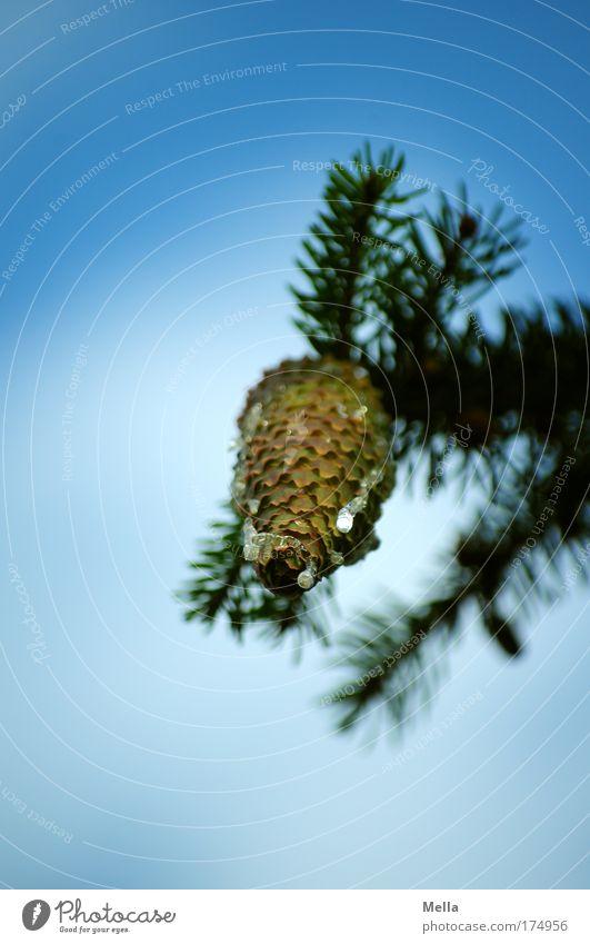 Kitsch as Kitsch can Himmel Natur blau Weihnachten & Advent Ferien & Urlaub & Reisen Baum Pflanze Umwelt Park Stimmung Tourismus Wachstum Kitsch Tanne hängen Umweltschutz