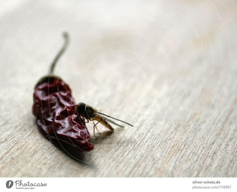 sting meets chili Farbfoto Innenaufnahme Nahaufnahme Detailaufnahme Makroaufnahme Textfreiraum rechts Lebensmittel Kräuter & Gewürze Chili Tier Flügel Wespen