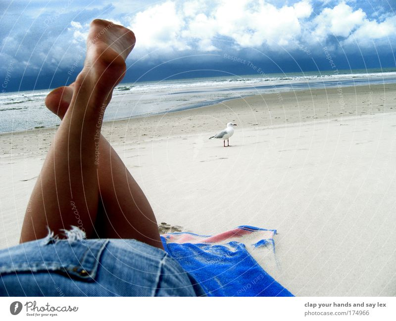 weit ab von allem Mensch Natur Jugendliche Himmel blau Sommer Ferien & Urlaub & Reisen ruhig Wolken Tier Erholung feminin Fuß Beine Stimmung Vogel