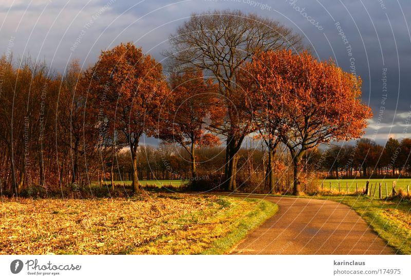 "Herbststraße Umwelt Natur Landschaft Himmel Gewitterwolken Sonnenlicht Wetter schlechtes Wetter Baum Gras Feld "" Land, Weide, Feld,"" Straße Wege & Pfade Beton"