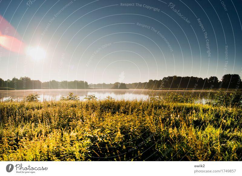 Unberührt Umwelt Natur Landschaft Pflanze Urelemente Wasser Wolkenloser Himmel Horizont Sommer Klima Schönes Wetter Baum Gras Sträucher See leuchten glänzend