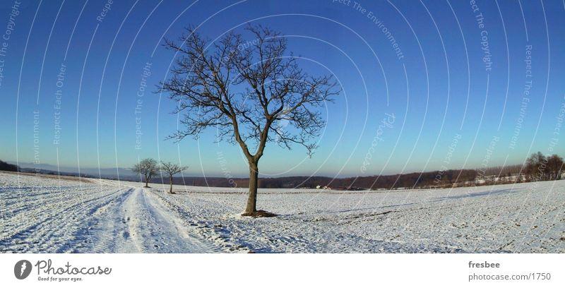 pano mit baum Baum Winter blau