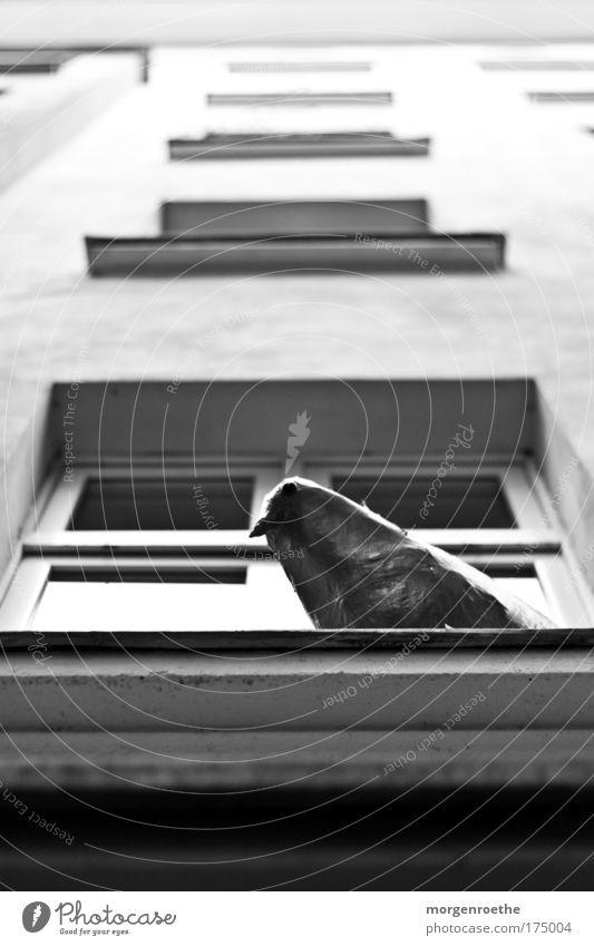 What is it like to be a bird? Stadt weiß Erholung ruhig Tier Haus Fenster schwarz Leben Stein Vogel Fassade Häusliches Leben frei Hochhaus sitzen