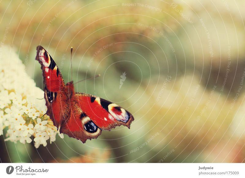 Pfauenauge Natur schön Sonne Pflanze Sommer ruhig Tier Erholung Gefühle Blüte Frühling Freiheit Glück Park Stimmung Umwelt