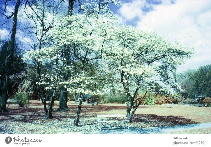 Frühling Sommer Blüte Blume Wald
