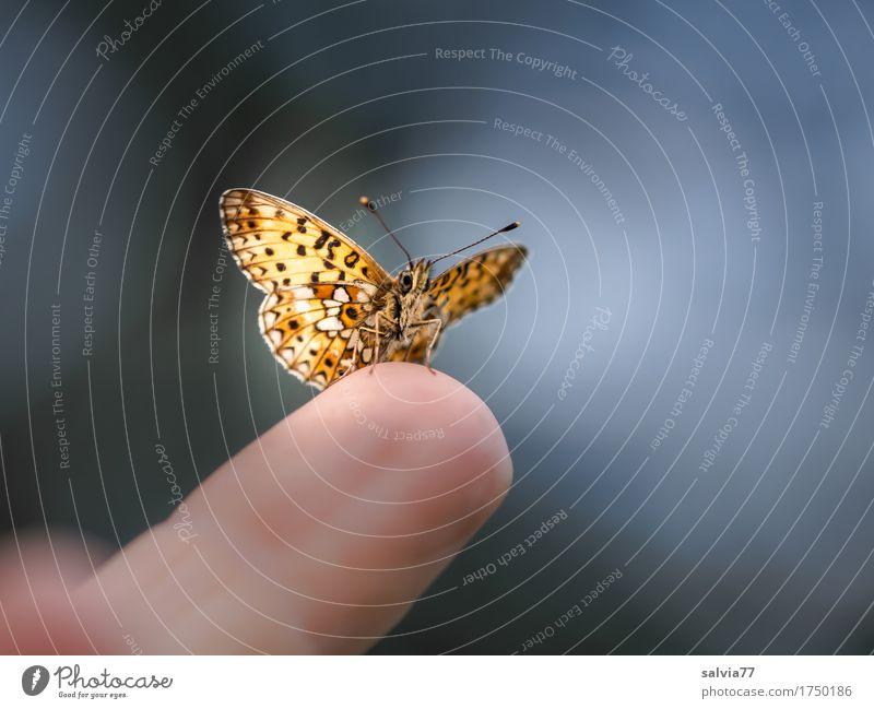zutraulich Himmel Natur blau Sommer Tier schwarz grau braun oben frei Perspektive Finger Flügel niedlich Neugier Pause