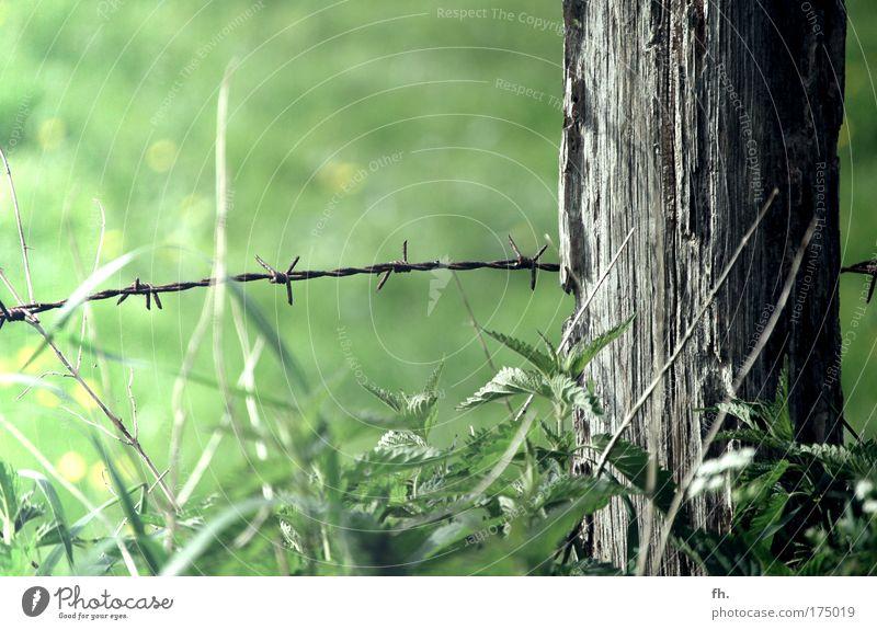 Drahtwiese Natur schön alt grün Sommer Leben Erholung Wiese Gefühle Gras Holz Glück Wärme Landschaft braun Kraft