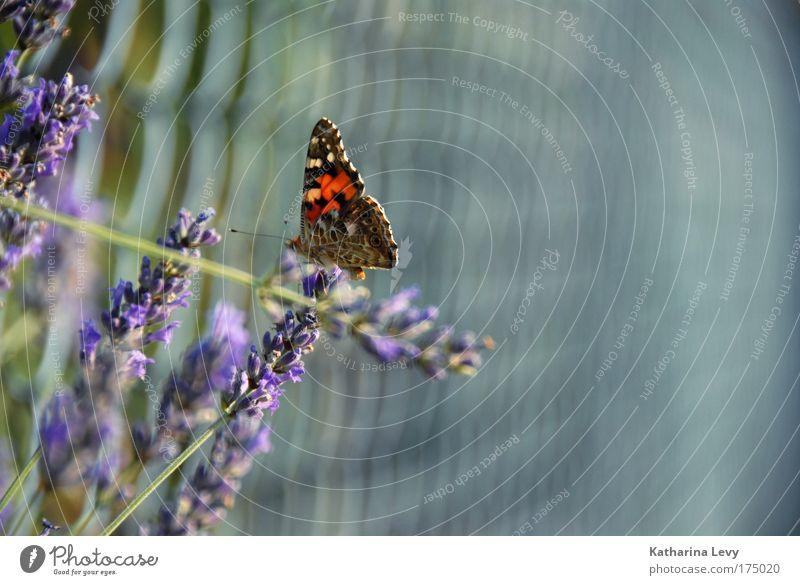 Landeplatz Blume grün Pflanze Sommer Tier Garten grau warten fliegen sitzen ästhetisch Romantik Sträucher authentisch violett rein