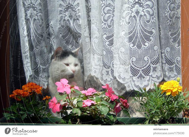 Hausarrest Haustier Katze 1 Tier Blick träumen weich mehrfarbig Sicherheit Tierliebe Trägheit Tag Farbfoto Außenaufnahme Schwache Tiefenschärfe Tierporträt