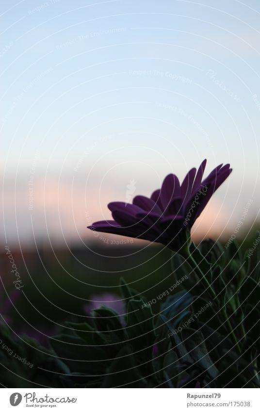 Abend auf Balkonien Natur Himmel Blume Pflanze Sommer Blüte Stimmung Schönes Wetter